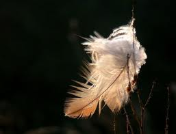 plumas emma