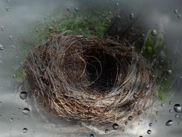 nido vacío